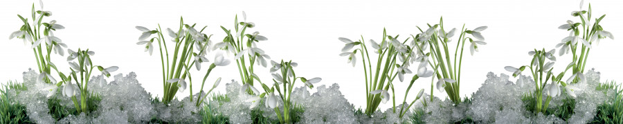 wildflowers-032