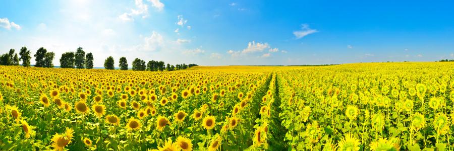 wildflowers-045