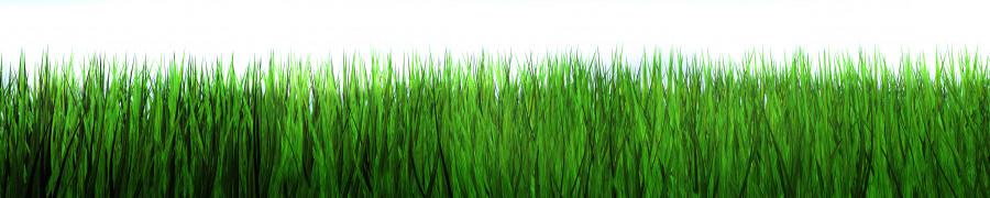 bamboo-plants-150
