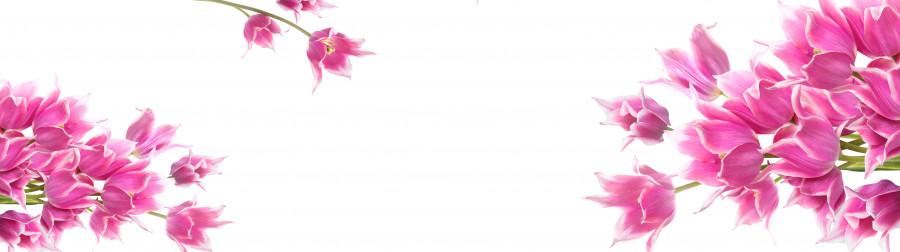 tulips-065