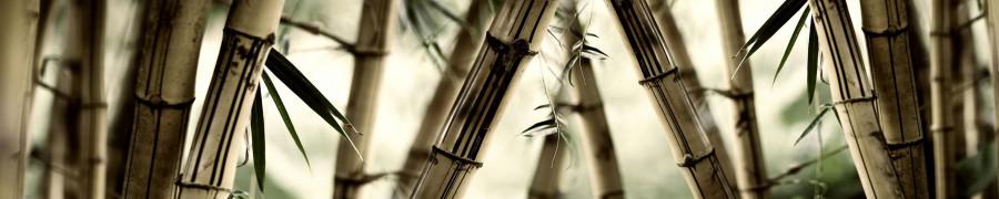 bamboo-plants-043