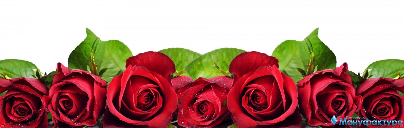 roses-001