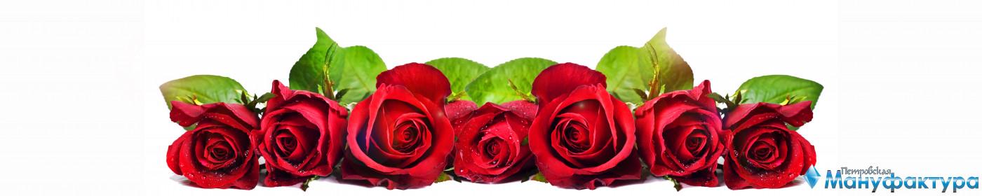 roses-038