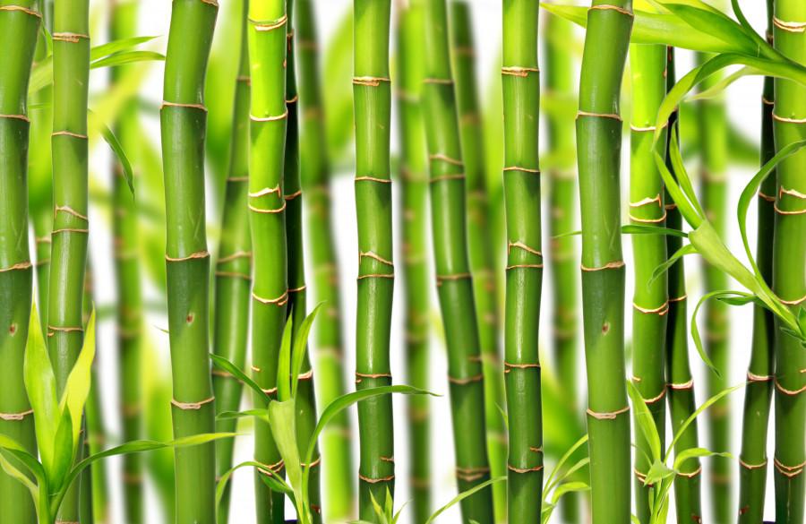 бамбукшаттер