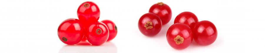 fruit-200