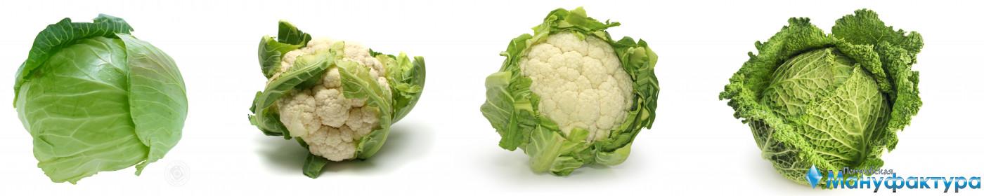 vegetables-119