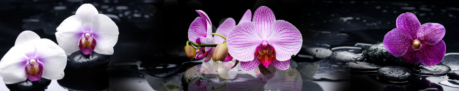 orchids-047