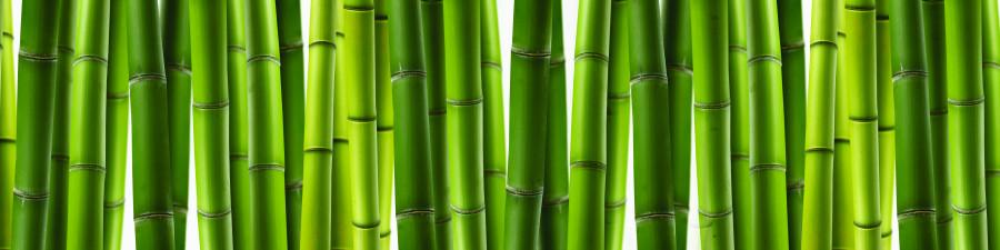 bamboo-plants-060