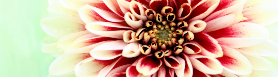 other-flower-132