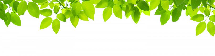 bamboo-plants-086