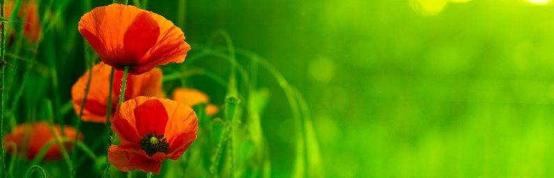 wildflowers-026