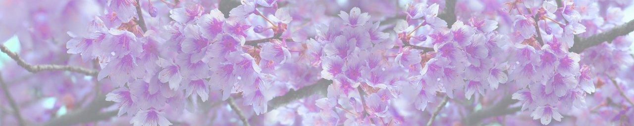 flowering-trees-074