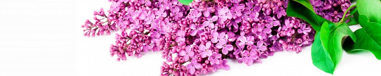 flowering-trees-050