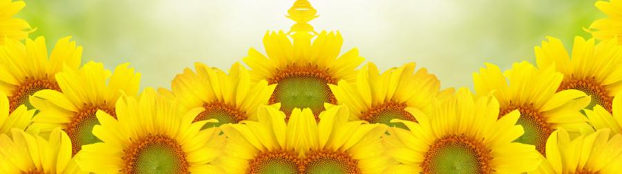 wildflowers-078
