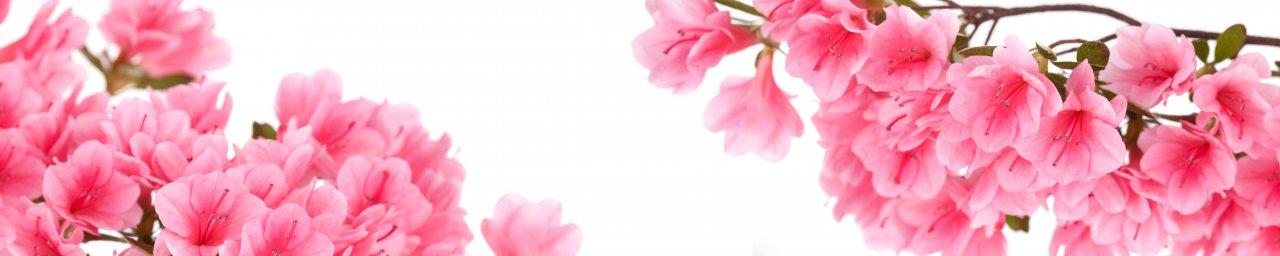 flowering-trees-041