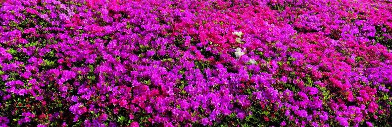 wildflowers-055