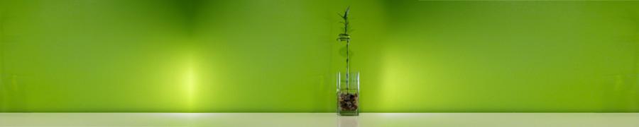 bamboo-plants-042