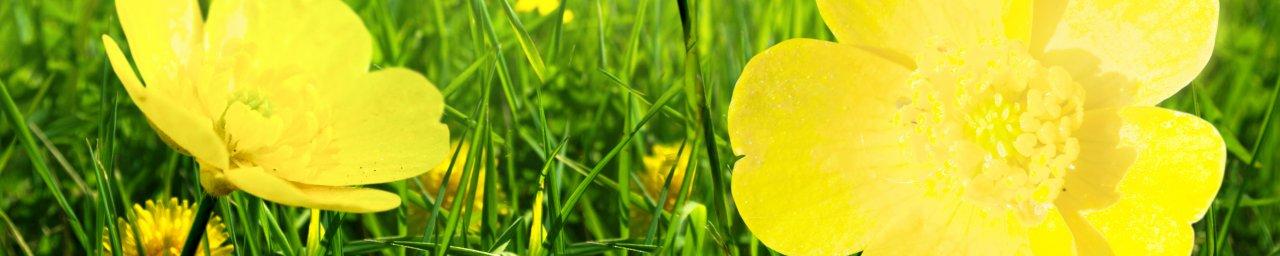 wildflowers-102