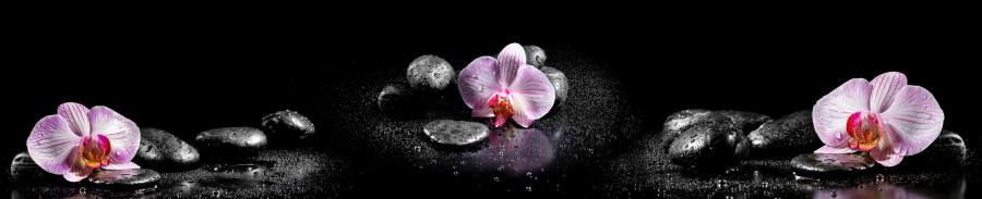 orchids-034