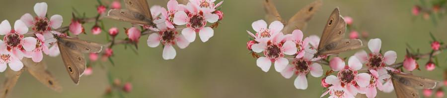 flowering-trees-054