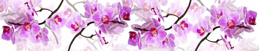 orchids-021