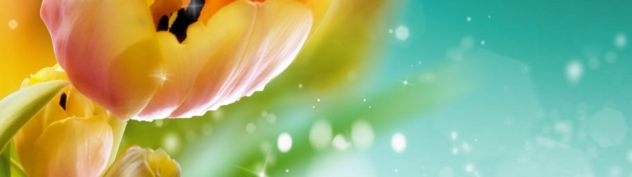 tulips-025