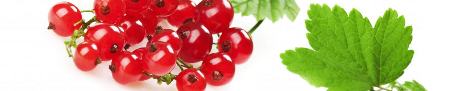fruit-199