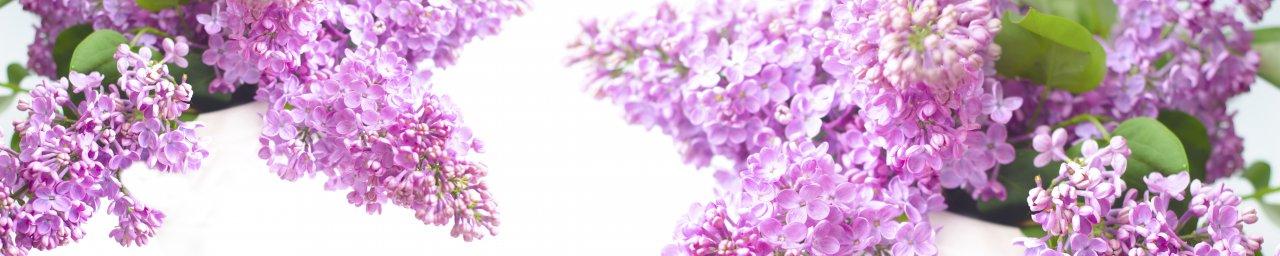flowering-trees-003