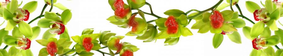 orchids-019