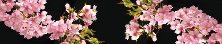 flowering-trees-028