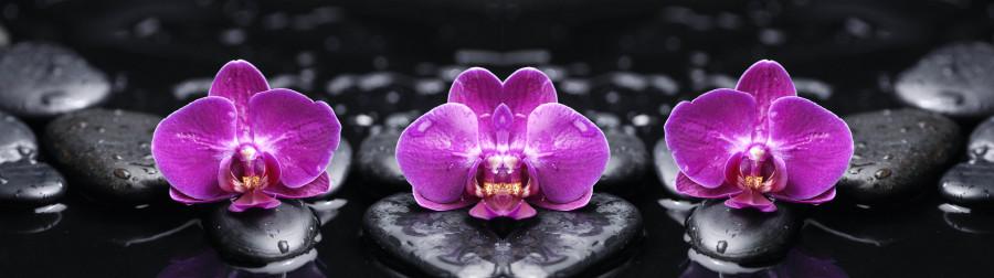 orchids-042