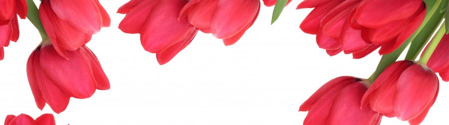 tulips-031