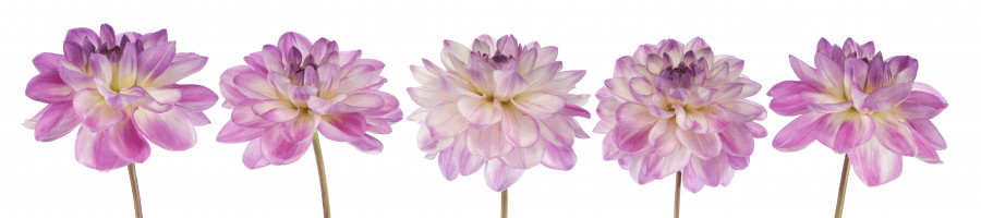 other-flower-086