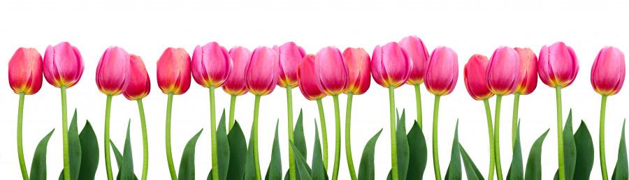 tulips-005