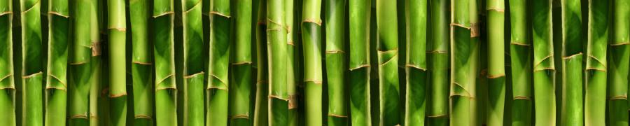 bamboo-plants-157