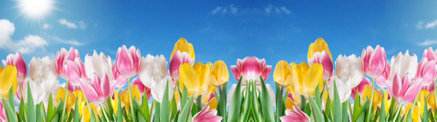 tulips-066