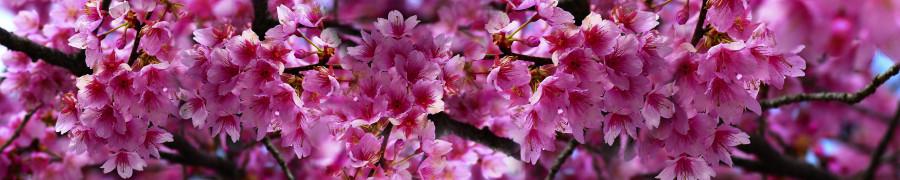 flowering-trees-073