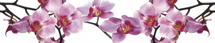 orchids-086
