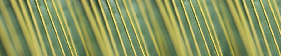bamboo-plants-057