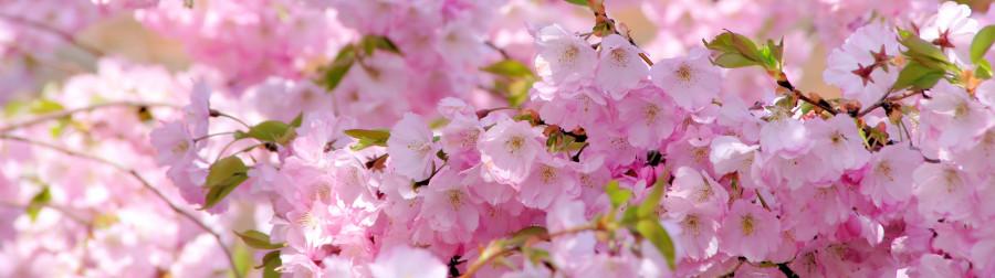 flowering-trees-012