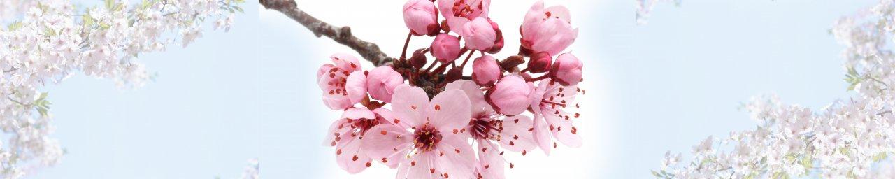 flowering-trees-015